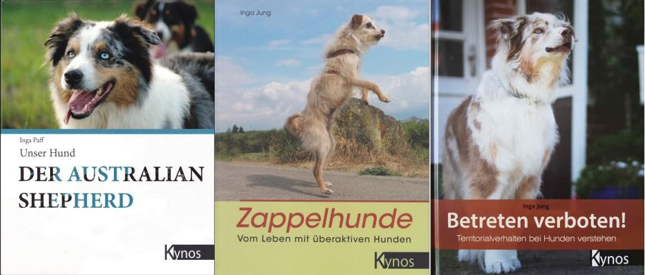 beschützerinstinkt bei hunden